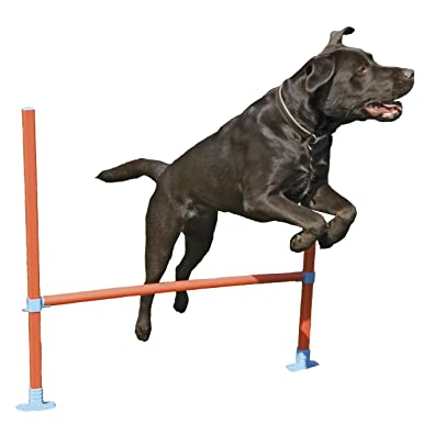 Rosewood Dog Agility Hurdle includes Bag: Amazon.co.uk: Pet Supplies