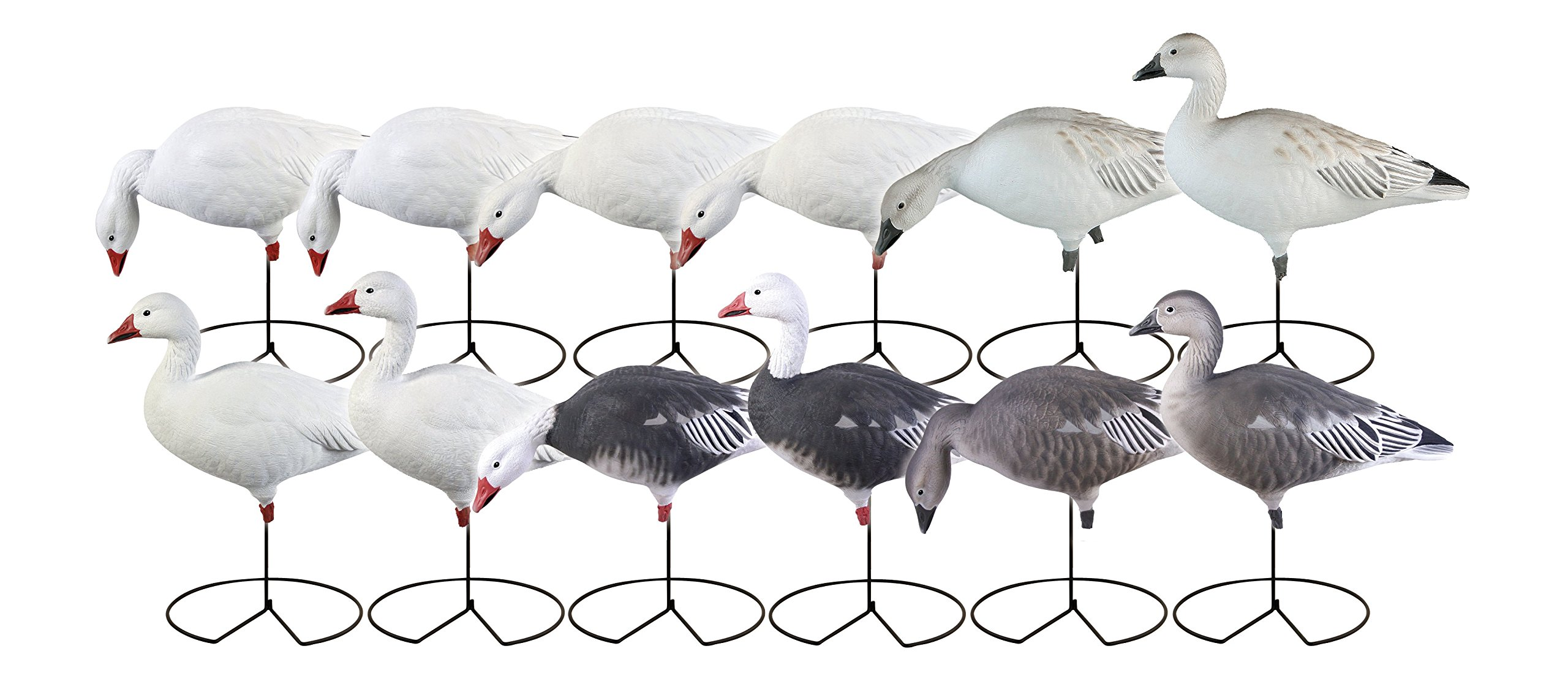 Avery Greenhead Gear, Pro-Grade Full Body Blue Snow Goose Decoys, 71199 - 12 Pack by Avery Outdoors Inc (Image #1)