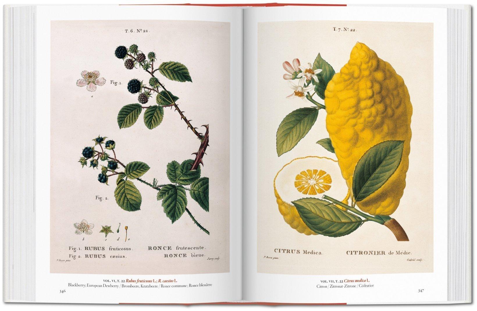 A Garden Eden Masterpieces Of Botanical Illustration Multilingual