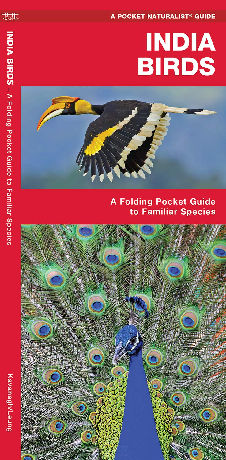 Download India Birds: A Folding Pocket Guide to Familiar Species (A Pocket Naturalist Guide) ebook