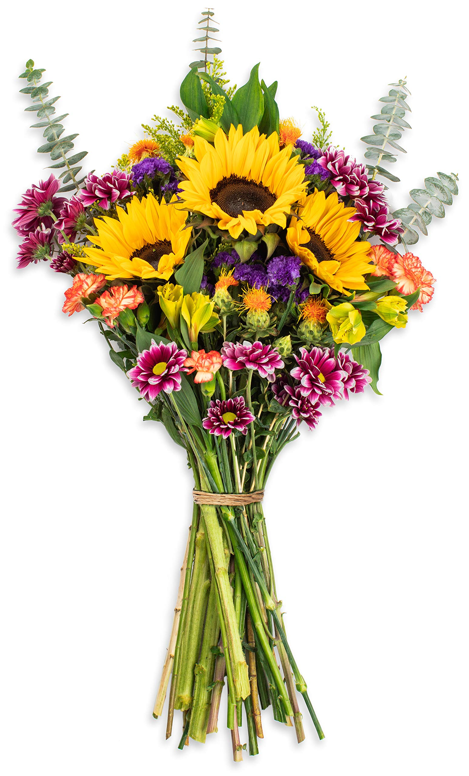 Amazon Com Benchmark Bouquets Big Blooms No Vase Fresh