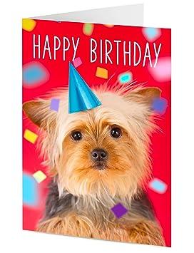 Feliz cumpleaños lindo Yorkshire terrier Cachorrito en sombrero del partido con confeti Tarjeta de