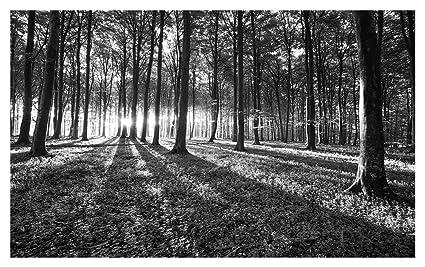 Papel Pintado Bosque Madera árboles Paisaje Blanco Y Negro Pared