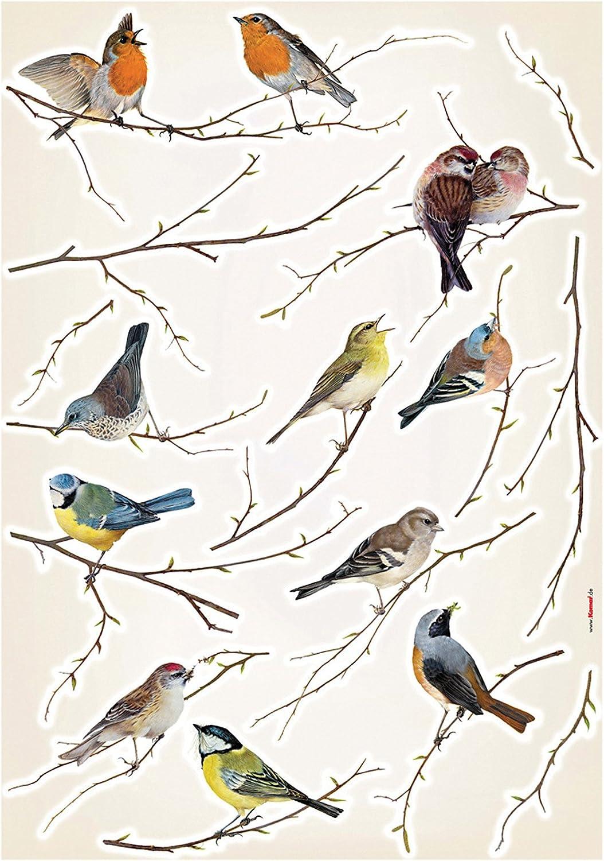 Brewster Komar LV19005 Birds Wall Decals, 19-Inch x 27-Inch Sheet