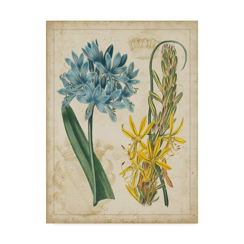 14x19 Trademark Fine Art WAG00356C1419GG Botanical Repertoire Ii by Vision Studio Wall Decor, Multicolor, 14x19