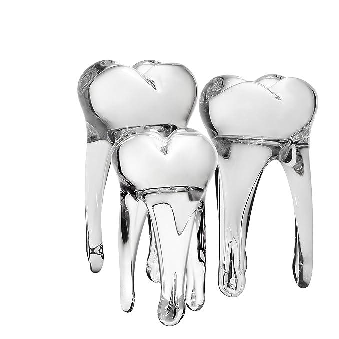Amazon.com: Diente – Escultura para práctica dental – Funny ...