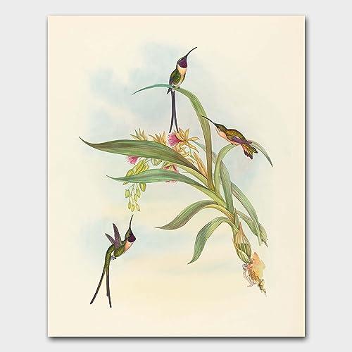 bird art for walls hummingbird print home decor artwork scissor tail