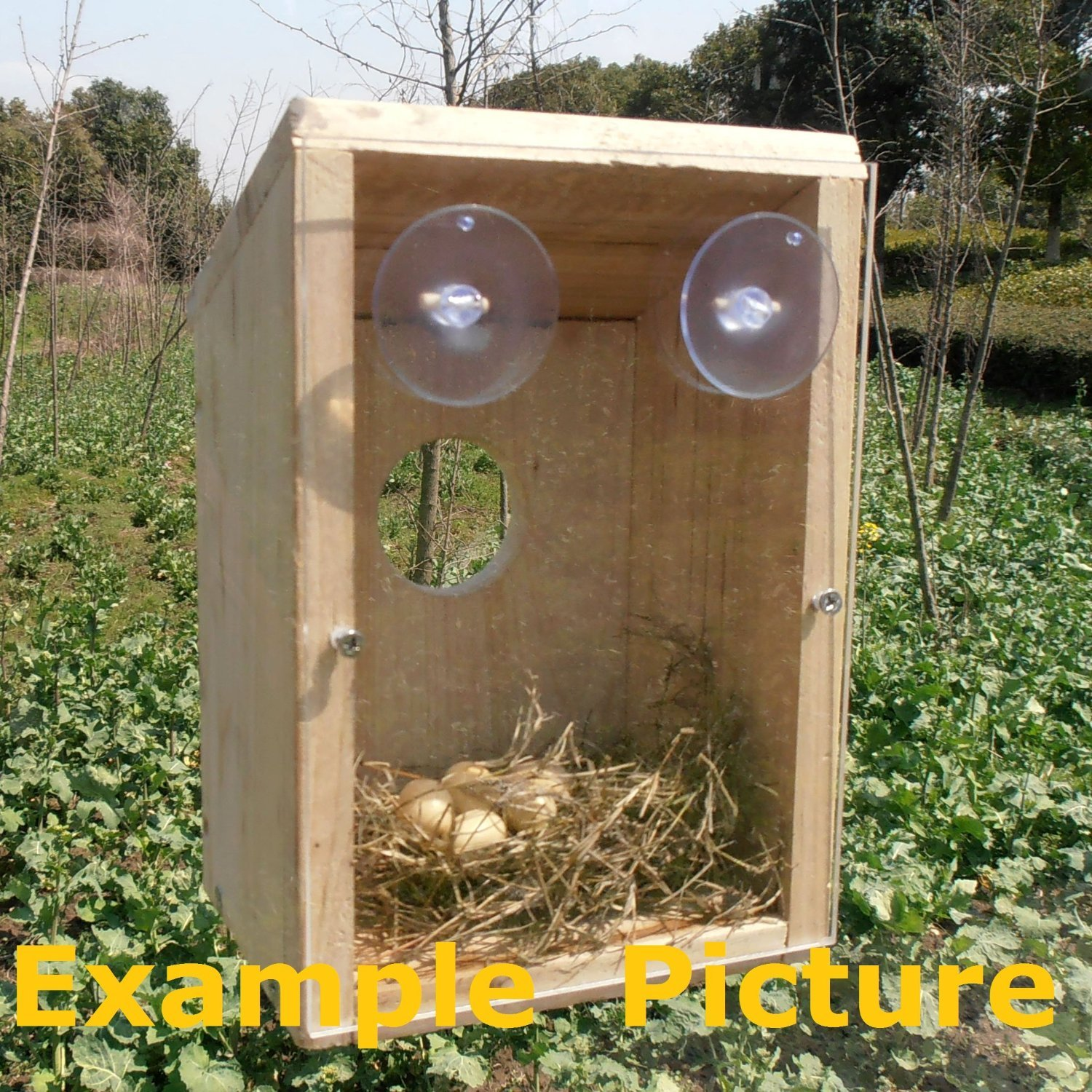 Window Mount Nest View Wild Bird House Research See Baby Birds / Meaningful Christmas Gift [HRUS]