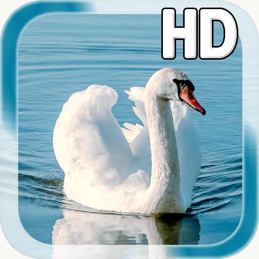 (Swan Bird Live Wallpaper)