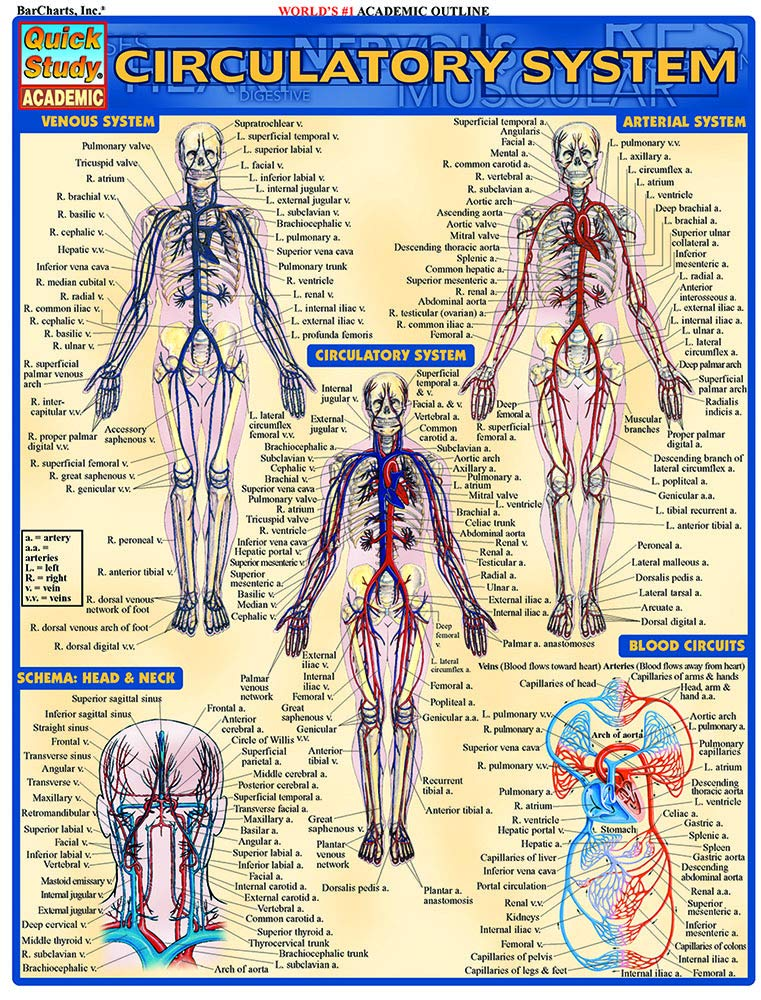 Download Circulatory System (Quick Study Academic) ebook