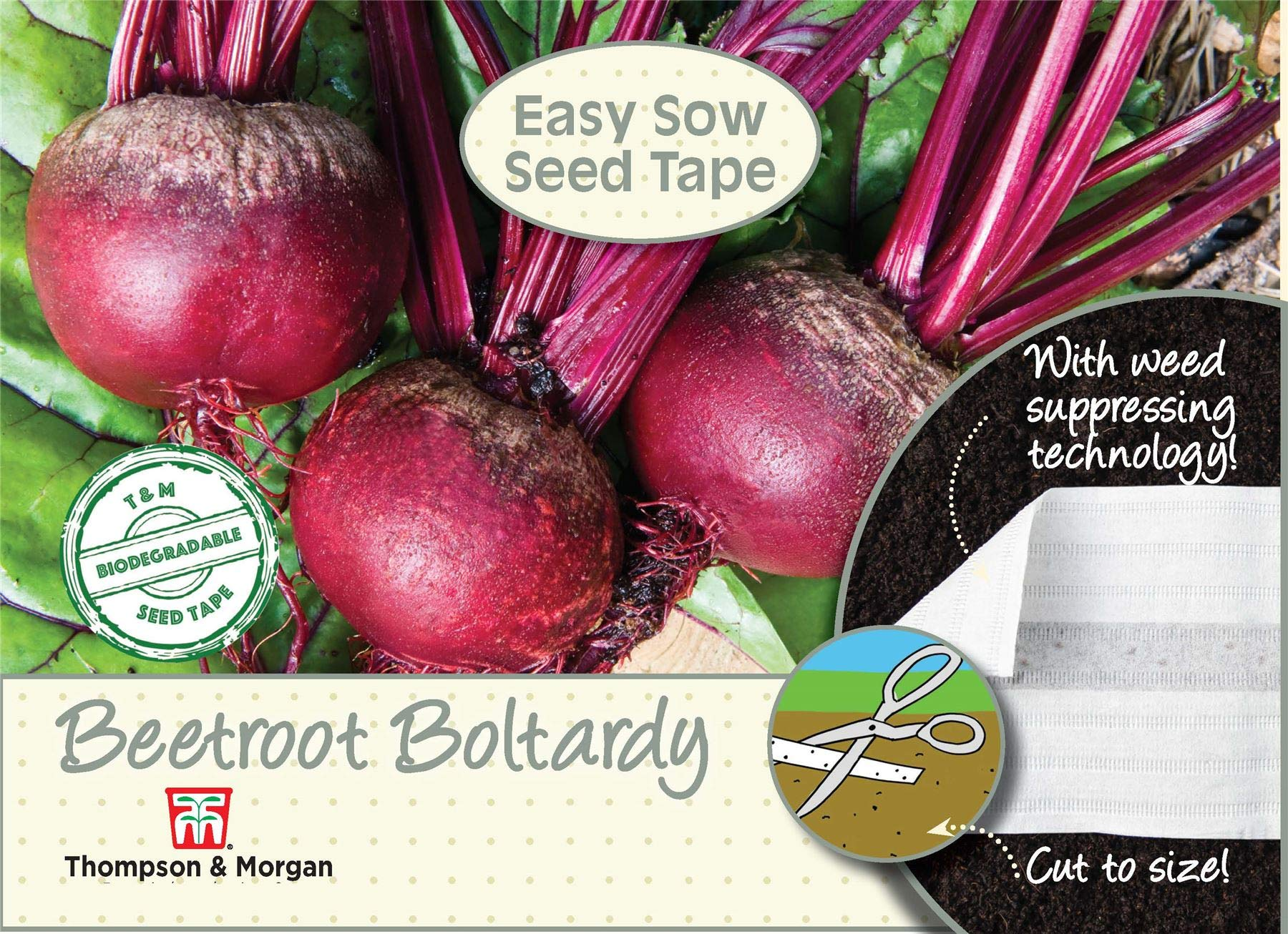 Beetroot Seeds Boltardy by Country Value Veg FREE UK DELIVERY Vegetable Seeds
