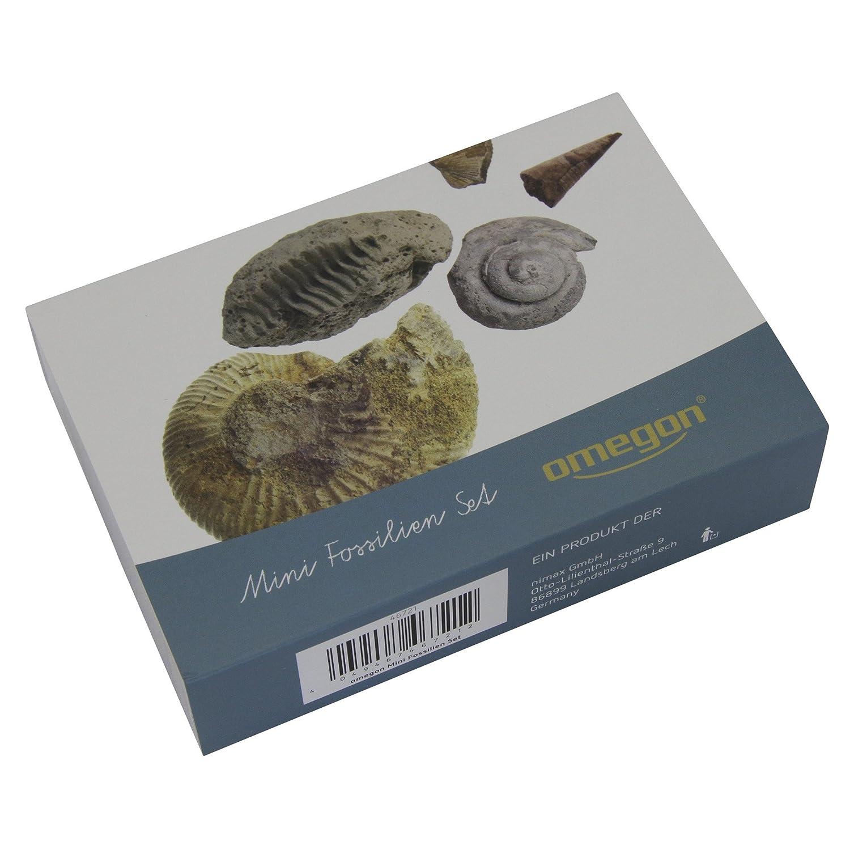 Omegon mini fossil set