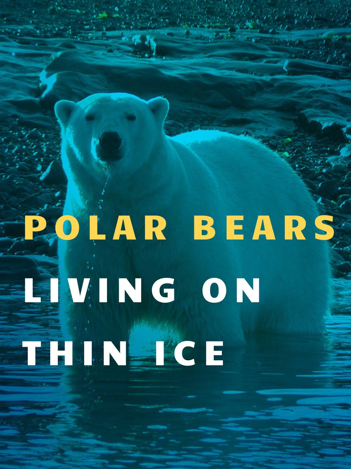 Polar Bears: Living on Thin Ice on Amazon Prime Video UK