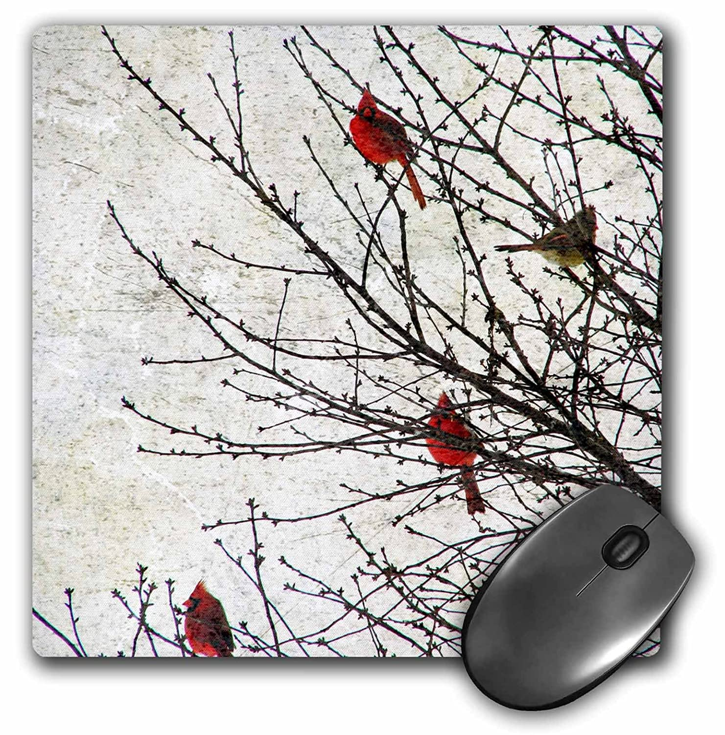 3dRose LLC 8 x 8 x 0.25 Inches Mouse Pad Cardinals Photographed by Angel and Spot mp 12387 1