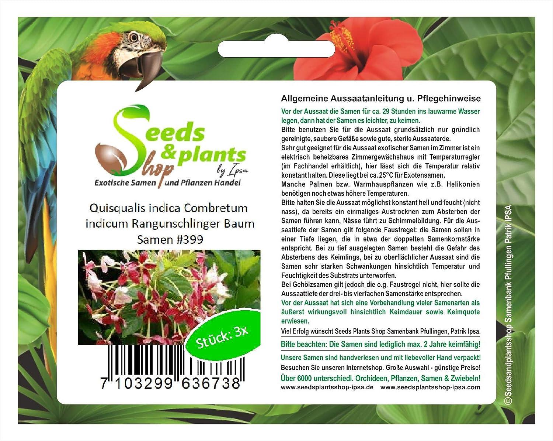 5 Zwiebeln Großer Milchstern // Ornithogalum Saundersiae März Versand ab 4