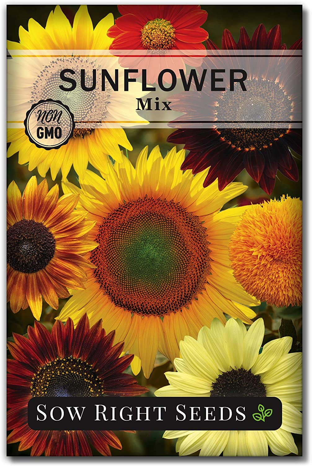 Sow Right Seeds - Large Full-Color Packet of Mixed Sunflower Seed to Plant - Non-GMO Heirloom - Instructions for Planting - Wonderful Gardening Gift (1)