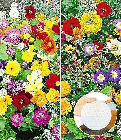 Blütenteppich Saatscheiben