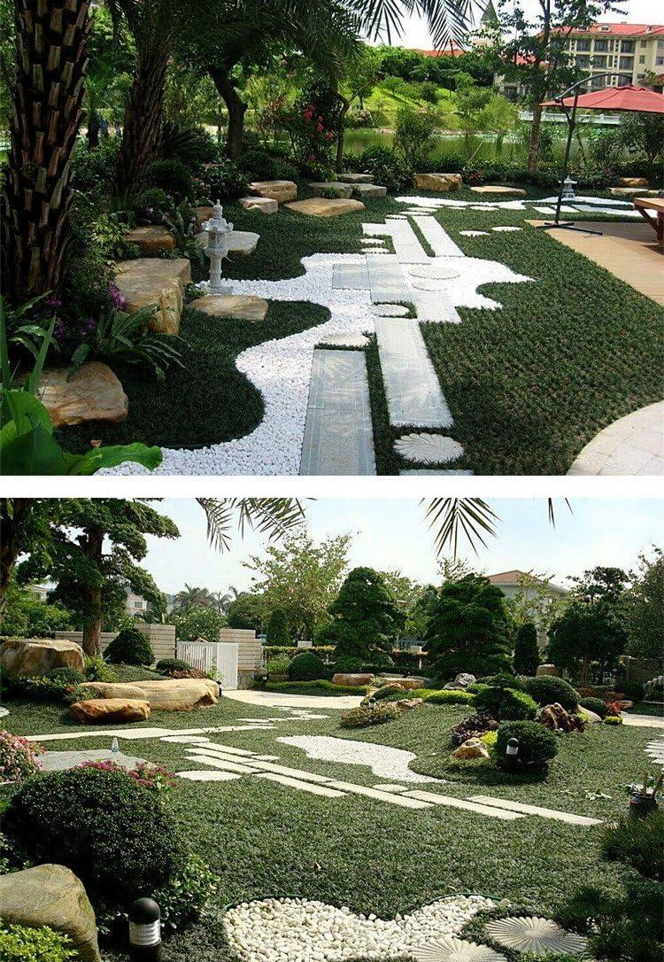 BEIYANG - Piedras Blancas Naturales de río para peceras, jarrón de jardín: Amazon.es: Jardín