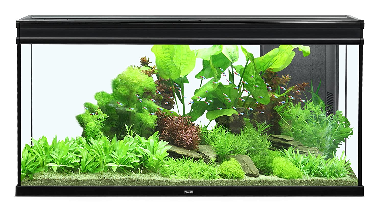 Acuario Expert LED 293 L, 120 x 40 cm, color negro: Amazon.es: Productos para mascotas
