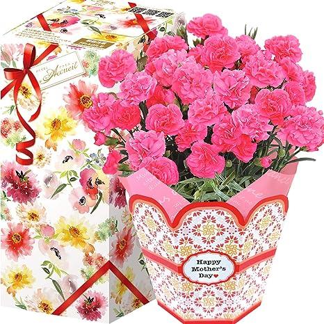 母の日 花鉢