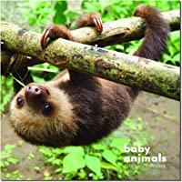 Wall Calendar 2020 - Baby Animals Calendar 2020 with Thick & Sturdy Paper, 12 x 12 inches, Jannuary 2020 - December 2020
