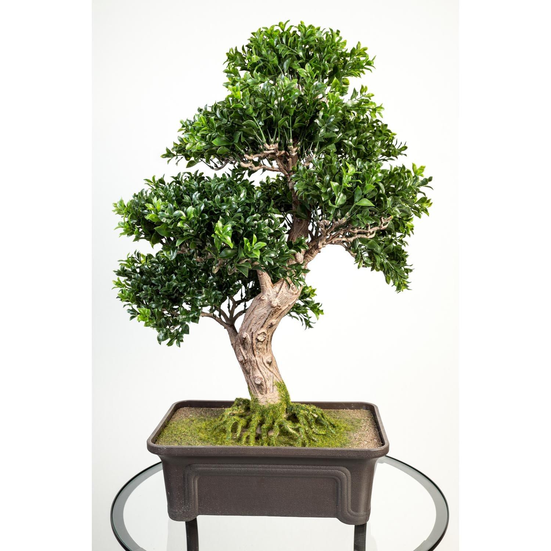 Artplants Künstlicher Buchs Bonsai in Schale, 550 Blätter, 65 cm - hochwertiger Kunstbonsai Buchsbonsai