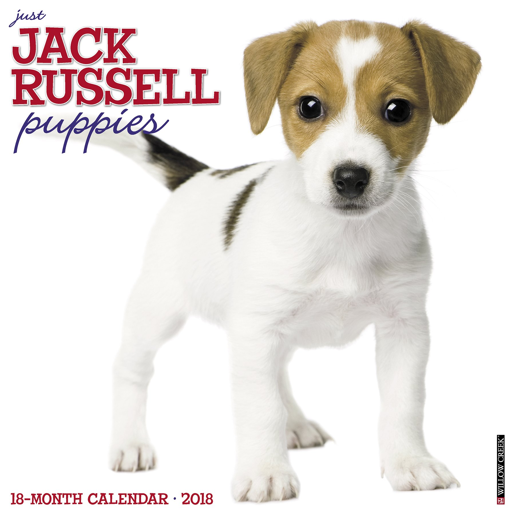 amazon just jack russell puppies 2018 calendar willow creek