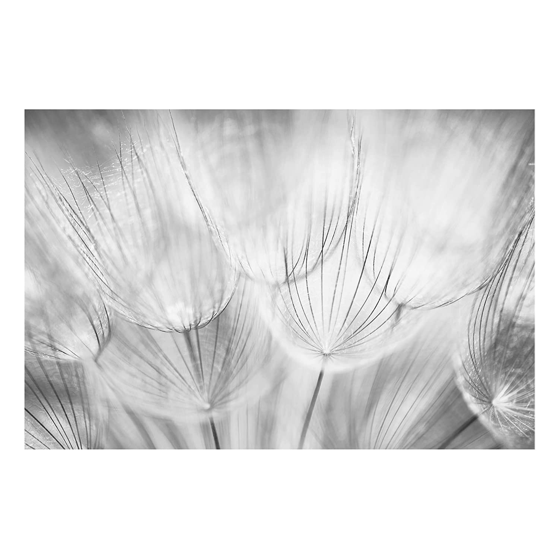 Bilderwelten Glass Splashback - Dandelions Macro Shot In Black And White - Landscape 2:3, Backsplash Cooker Splashback Protector Panel Decorative Splashback Panel, Dimension HxW: 40cm x 60cm PPS. Imaging GmbH