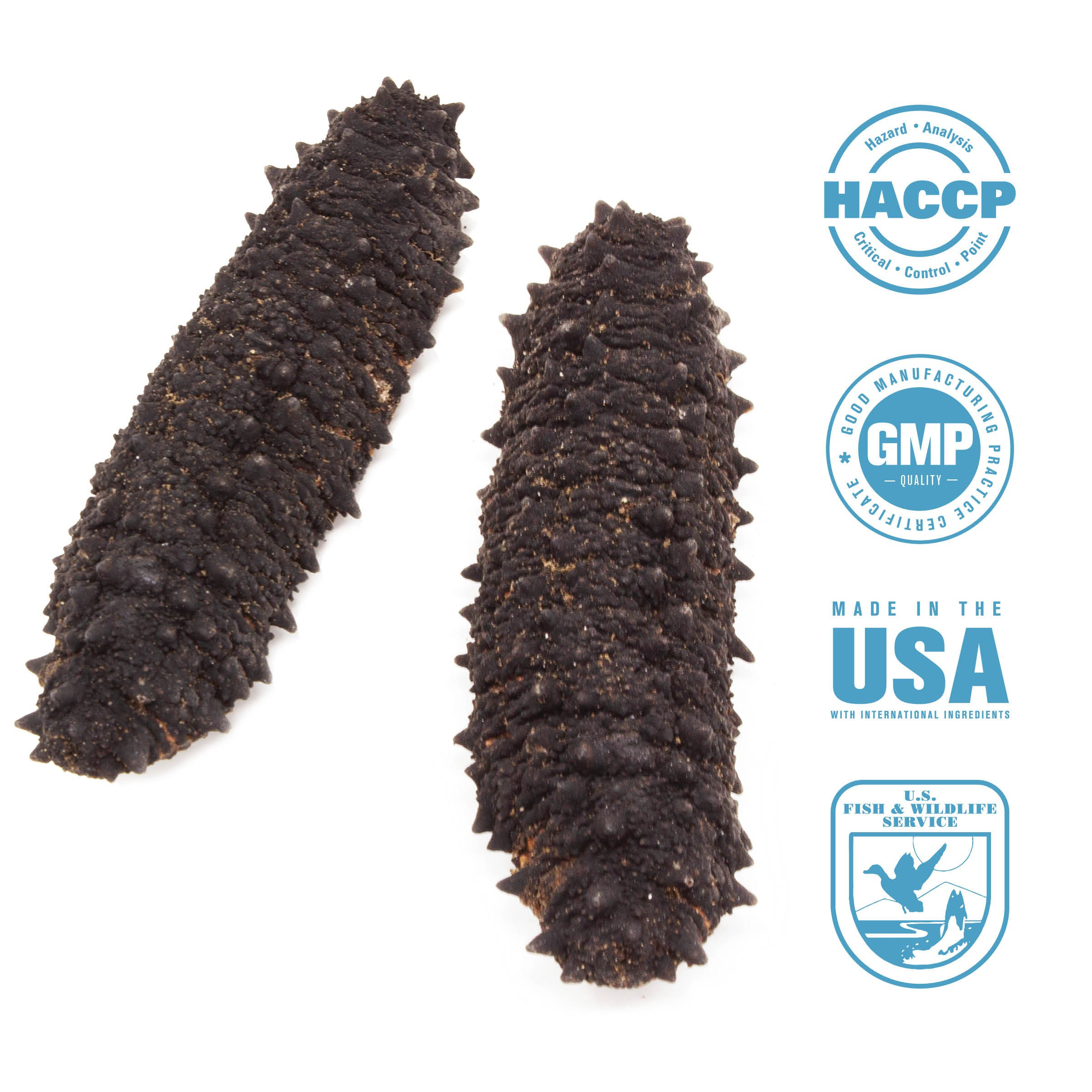 SB Organics Spiny Black Sea Cucumber - Wild Caught Sea Cucumber Dried All Natural Nutritious - 8 oz