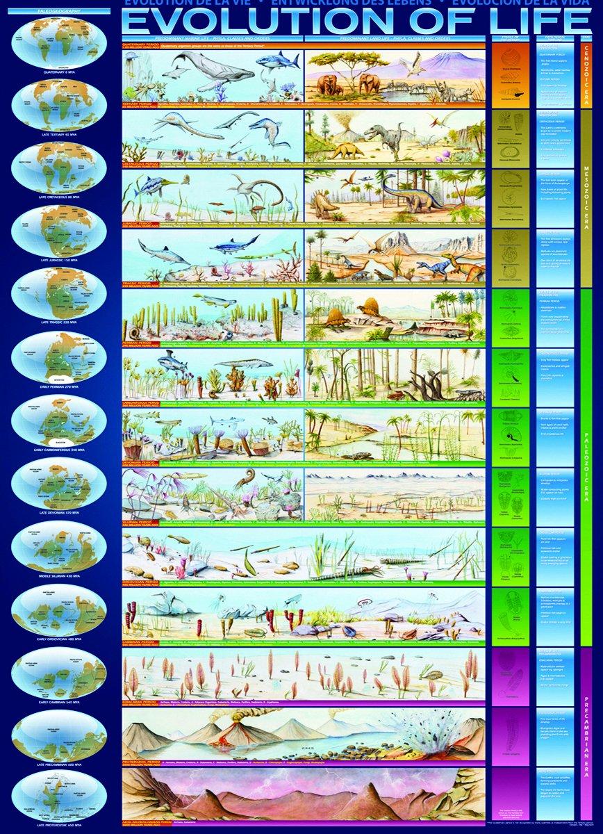 evolution of life - HD800×1106