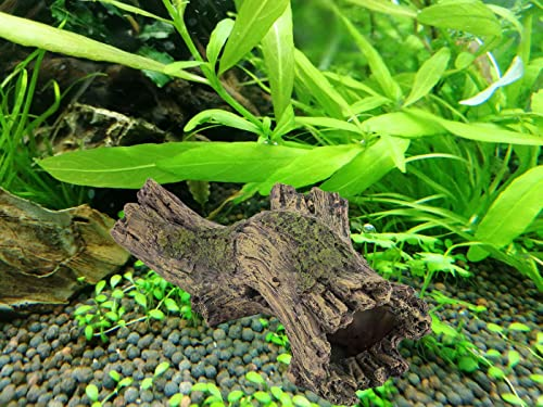 best-driftwood-for-aquarium