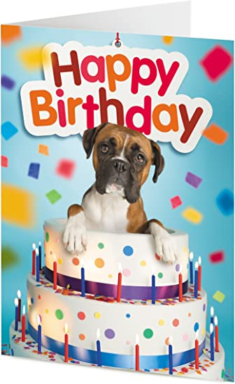 Wondrous Tigermill Publishing Boxer Dog Emerges From Giant Birthday Cake Birthday Cards Printable Benkemecafe Filternl