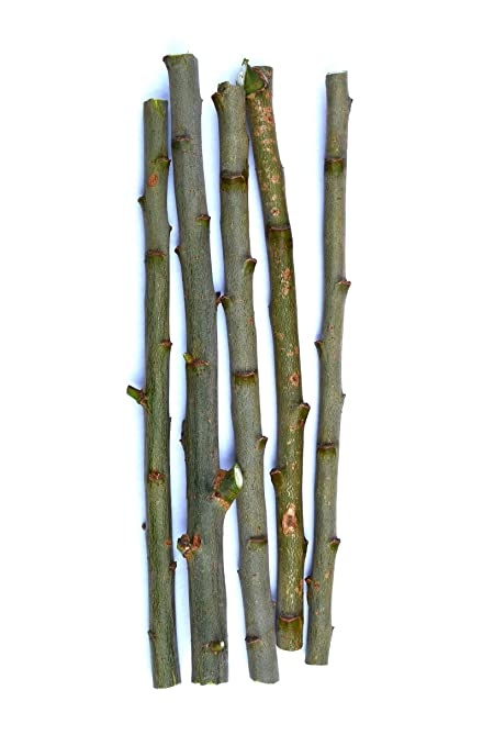 Are mistaken. buy pussy willow opinion