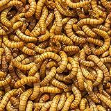 DBDPet Organically Grown Bulk Premium 1,500ct Live Mealworms - Great Food for Leopard Geckos, Chameleons, Geckos, Wild…
