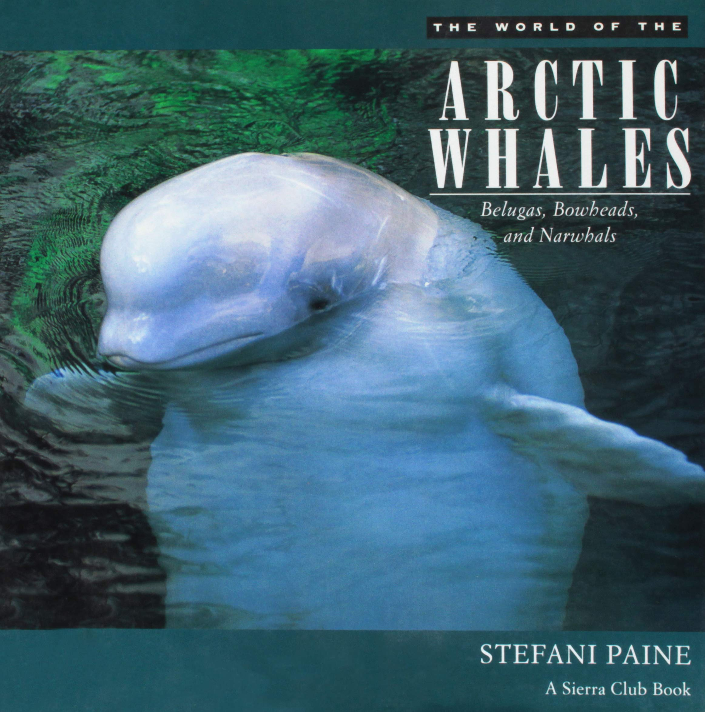 The World of the Arctic Whales: Belugas, Bowheads, and Narwhals Hardcover – October 1, 1995 Stefani Paine Sierra Club Books 0871563789 General