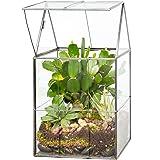 Deco Glass Geometric Terrarium, Succulent & Air Plant- Hinged (5.9 x 5.1 x 11 in) - Great