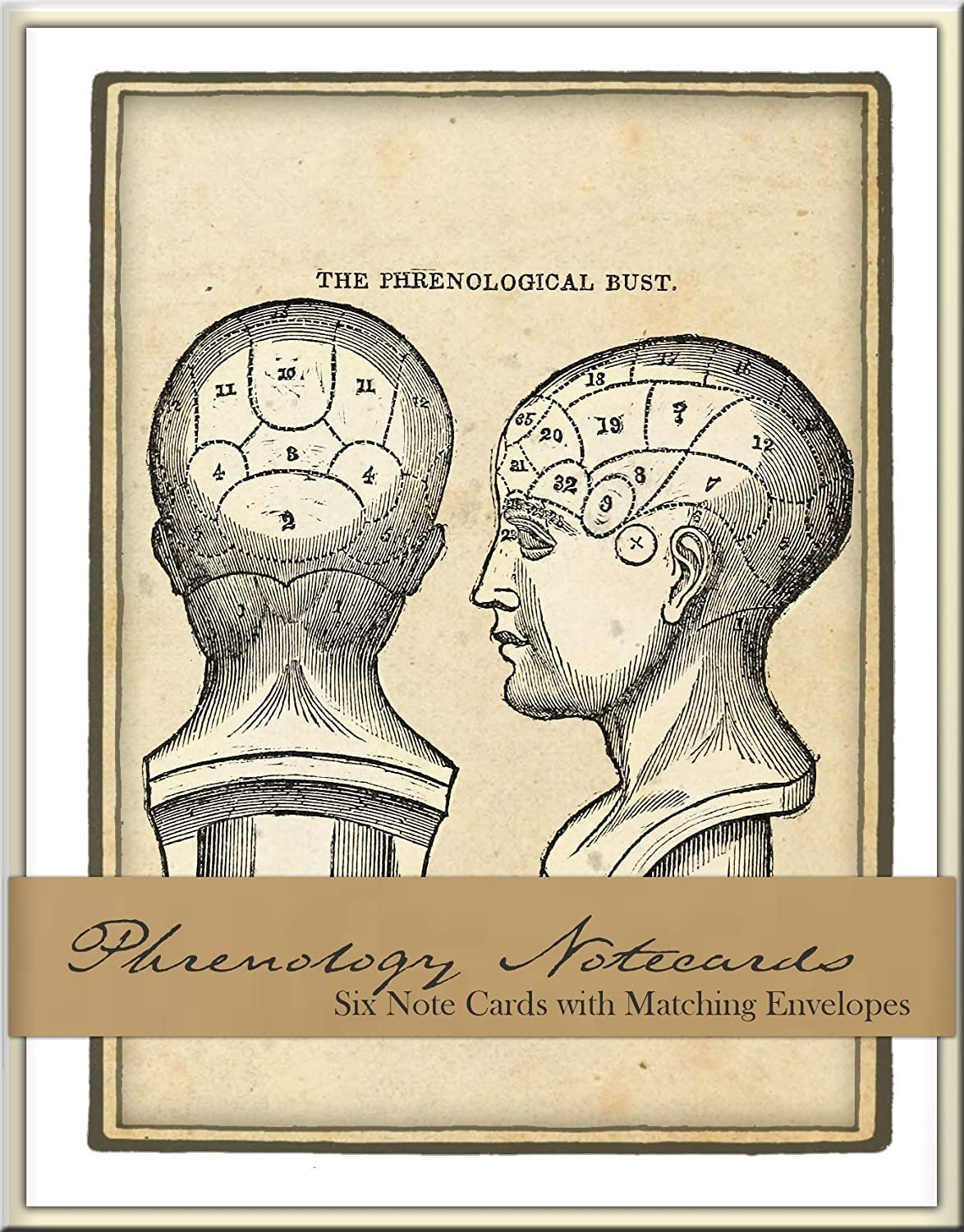 Phrenology Heads Boxed Note Card Set of 6 blank cards with envelopes