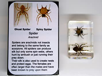 Real spiders arachnids insects in crystal clear resin with