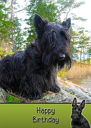 Scottie Scottish Terrier Dog Birthday Card 8quotx55quot Mix