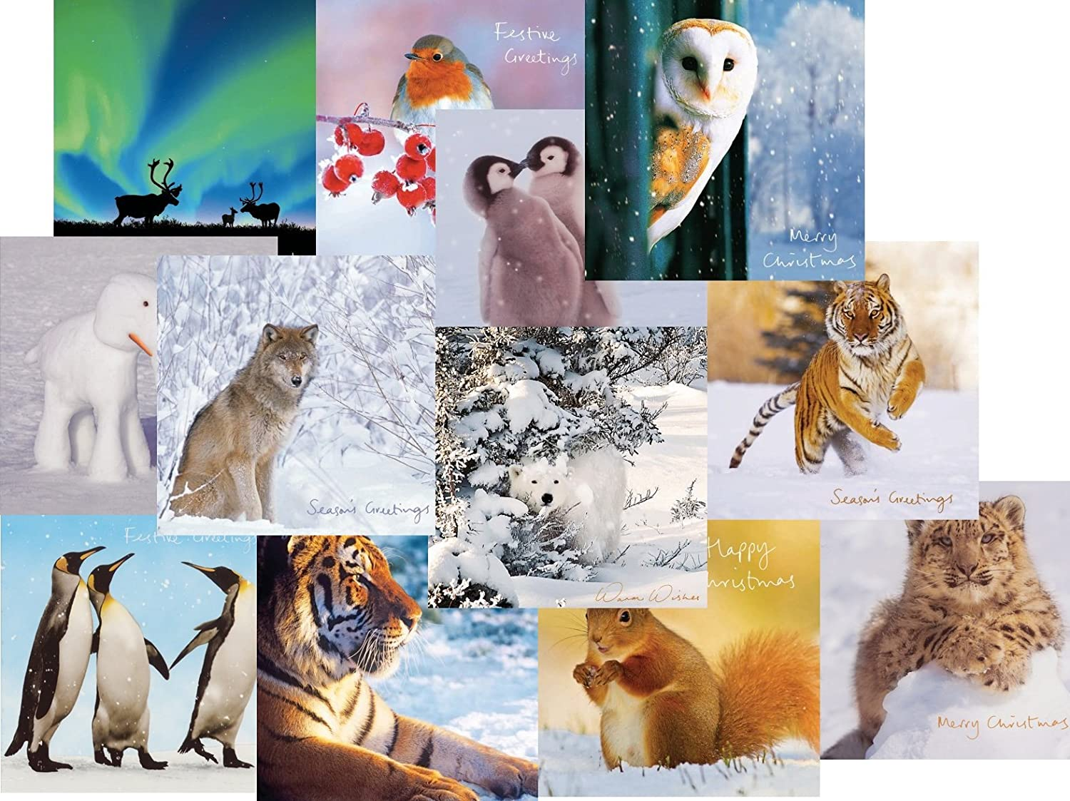Animal Charity Christmas Cards SELECTION PACK (12) British Animals ...