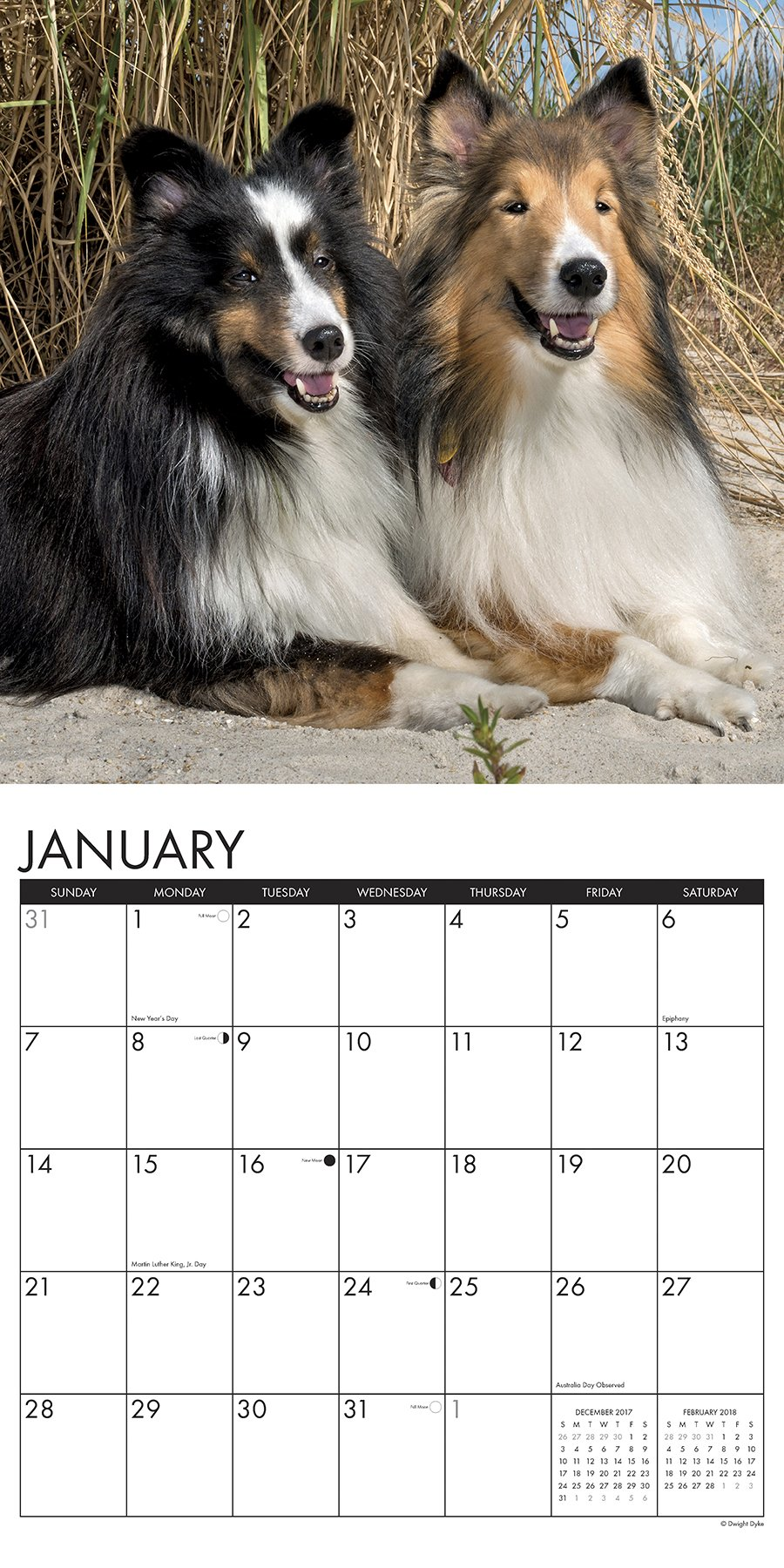 Just shelties 2018 calendar willow creek press 0709786042098 just shelties 2018 calendar willow creek press 0709786042098 amazon books nvjuhfo Images