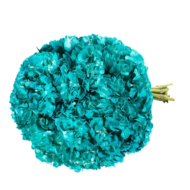 Farm Fresh Natural Painted Aqua Hydrangeas - Pack 26 by Bloomingmore (Image #3)