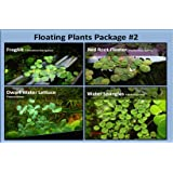 G & Z Aquarium Floating Plants Package #2, 12 Amazon Frogbit, 12 Dwarf Water Lettuce, 12 Water Spangles, 12 Red Root Floater