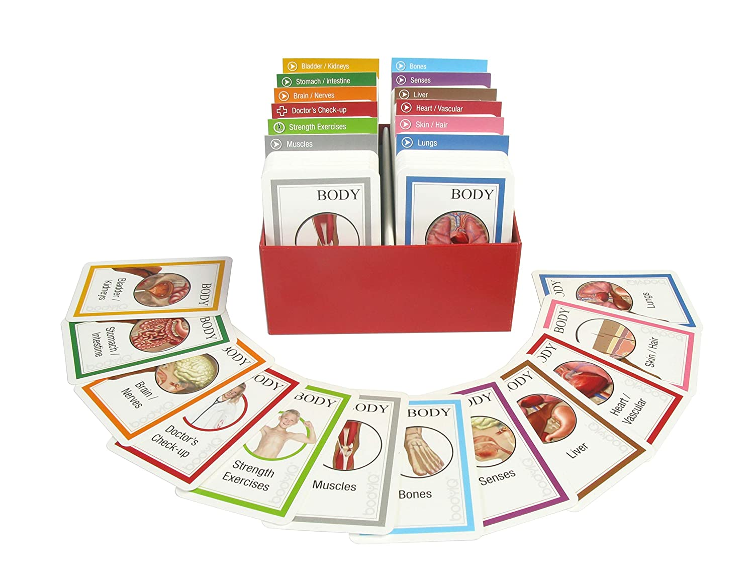 American Educational Products Body IQ Standard Set of Cards