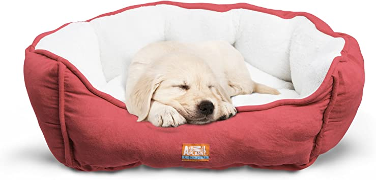 Amazon.com: Cama ortopédica de lujo para perro Animal Planet ...