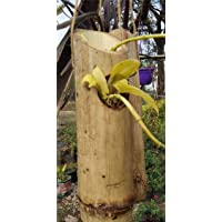 Grass Root Bamboo Planter Hanging Vertical Pots