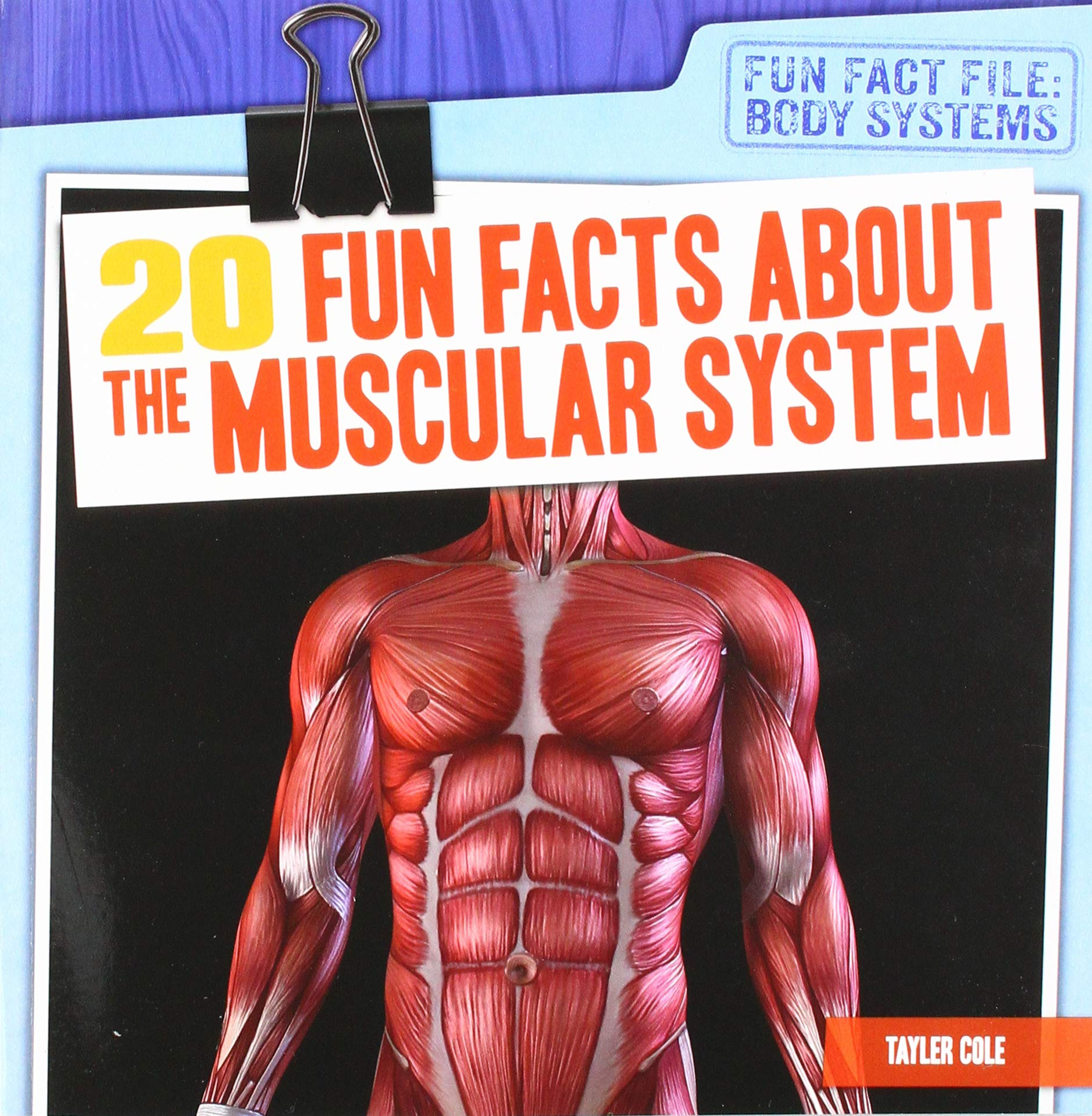 20 Fun Facts About The Muscular System Fun Fact File Body Systems
