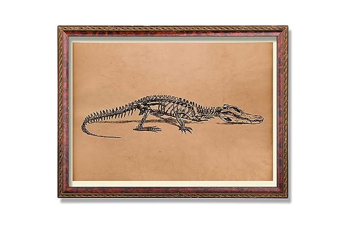 Amazon.com: Animal anatomy print Antique skeleton art Anatomical ...