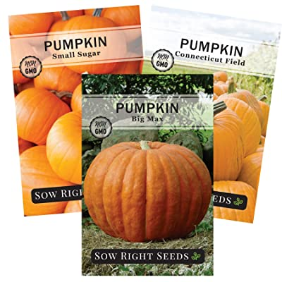 Sow Right Seeds - Pumpkin Seed Collection for Planting - Big Max, Connecticut Field, and Small Sugar Pumpkins. Non-GMO Heirloom Packet with Instructions to Plant a Home Vegetable Garden : Garden & Outdoor