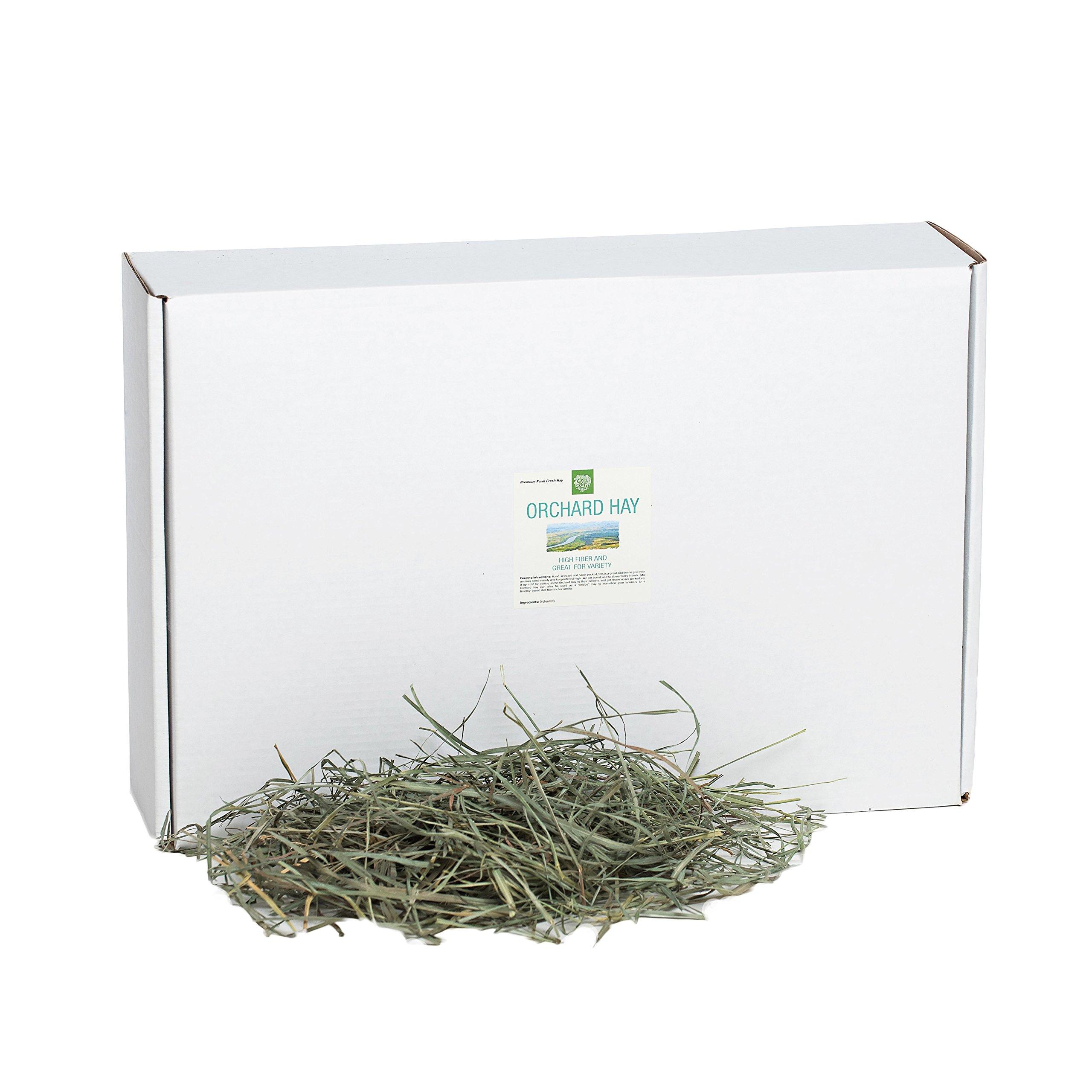 Small Pet Select Orchard Grass Hay Pet Food, 10 lb.